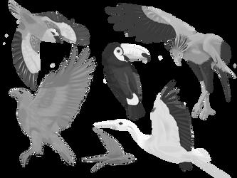 Birds by kukuzapol