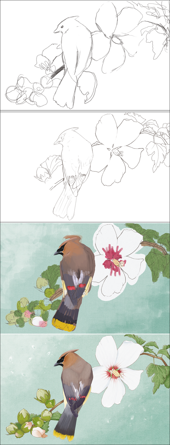 cedar waxwing progress by mybirdy