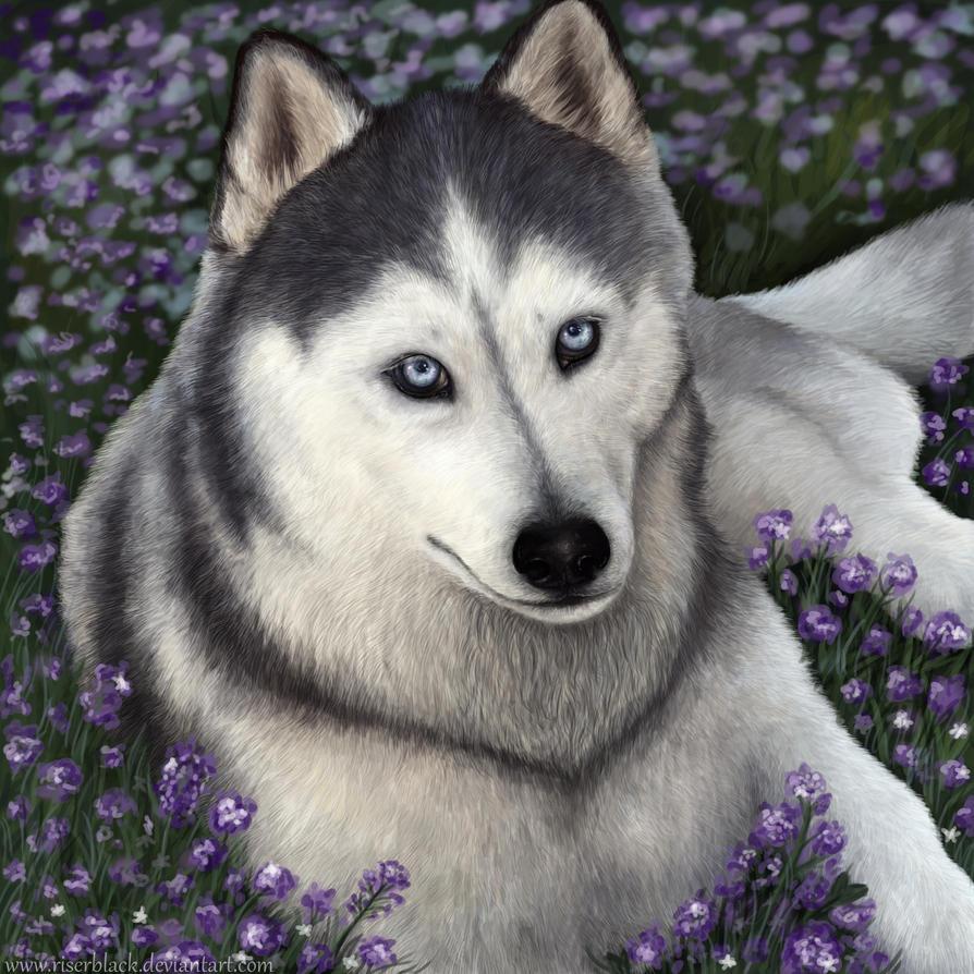 Violet by BernsBrim
