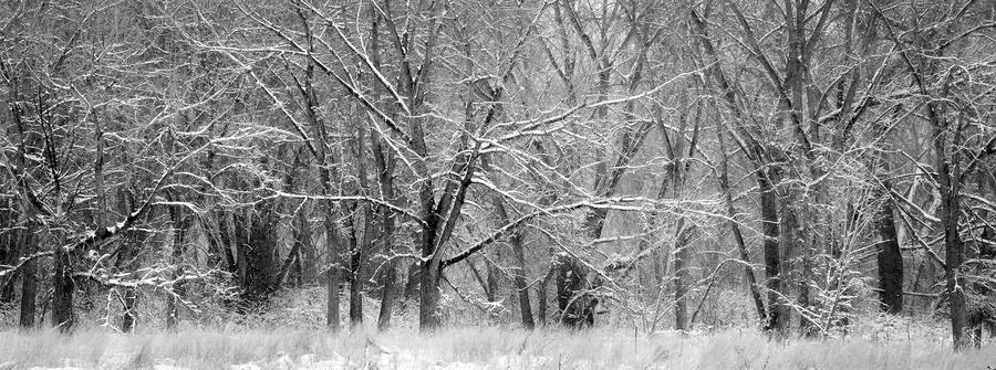WinterTrees by DuctTapedPandasSTOCK