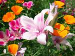Light Pink Flower 1 Stock