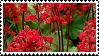 heuchera stamp by r0senr0tten