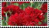 chrysanthemums stamp by r0senr0tten