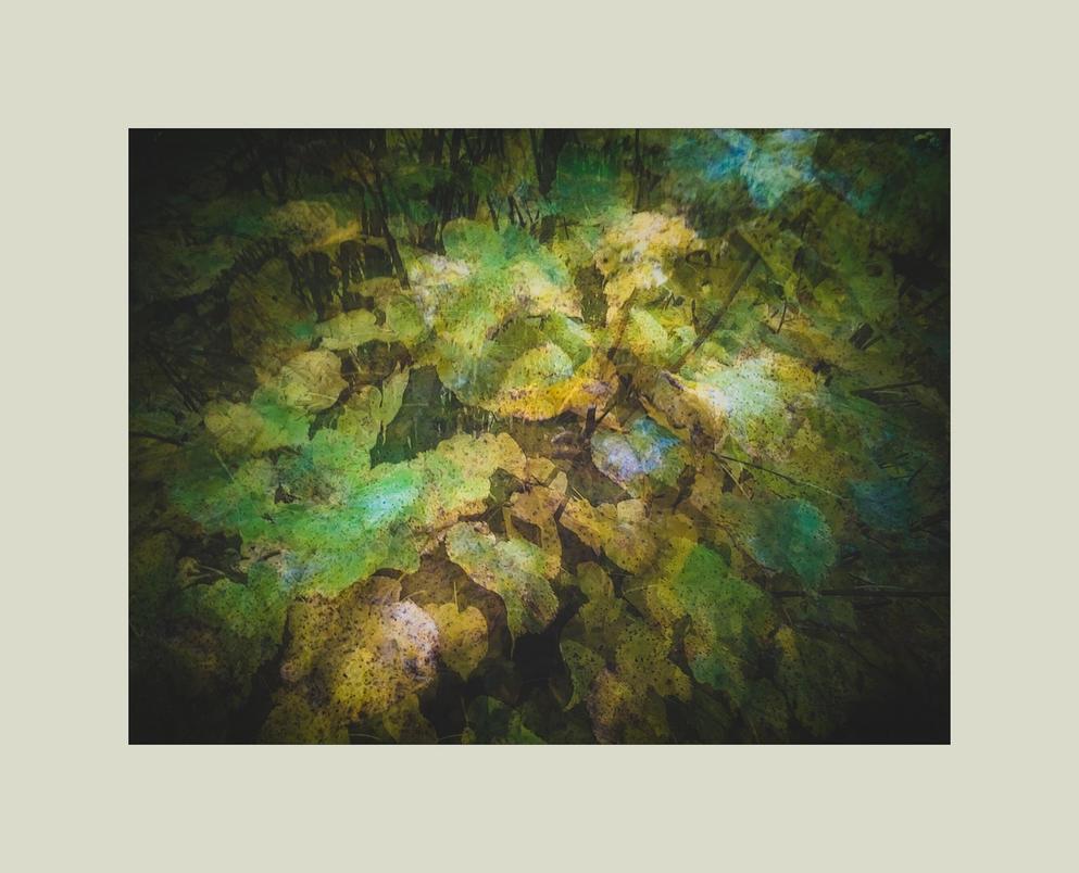 autumnal herbarium 5 by ForrestBump