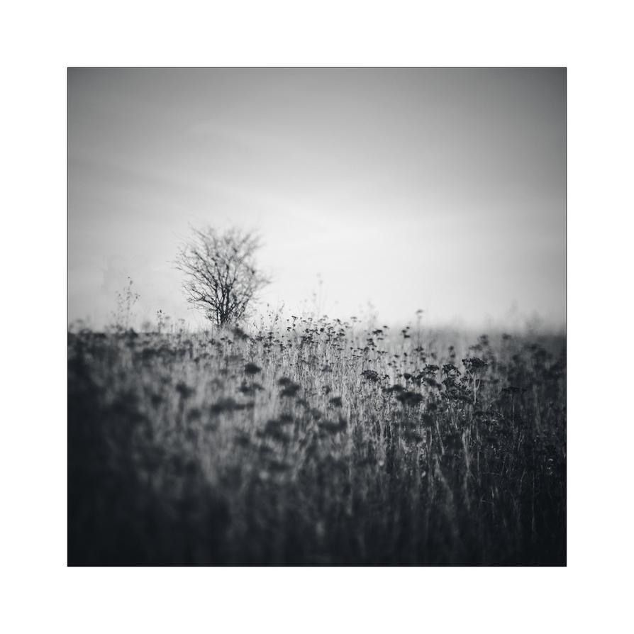 dvs202 by ForrestBump