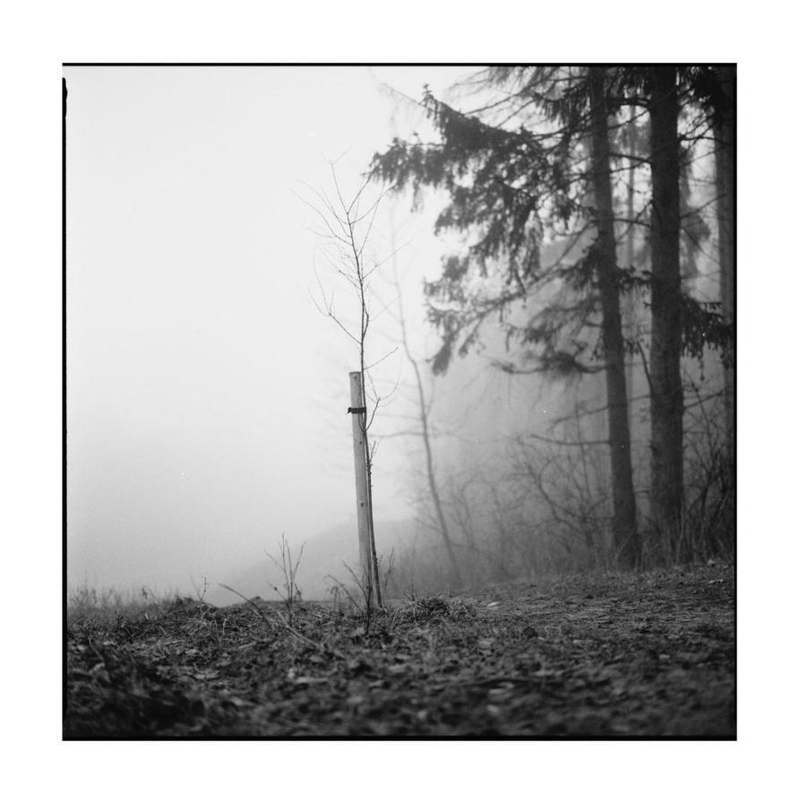 dvs242 by ForrestBump