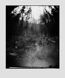 dvs260 by ForrestBump