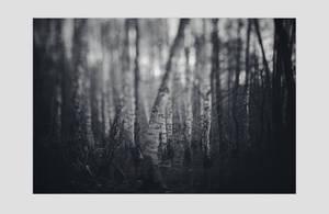 dvs269 by ForrestBump