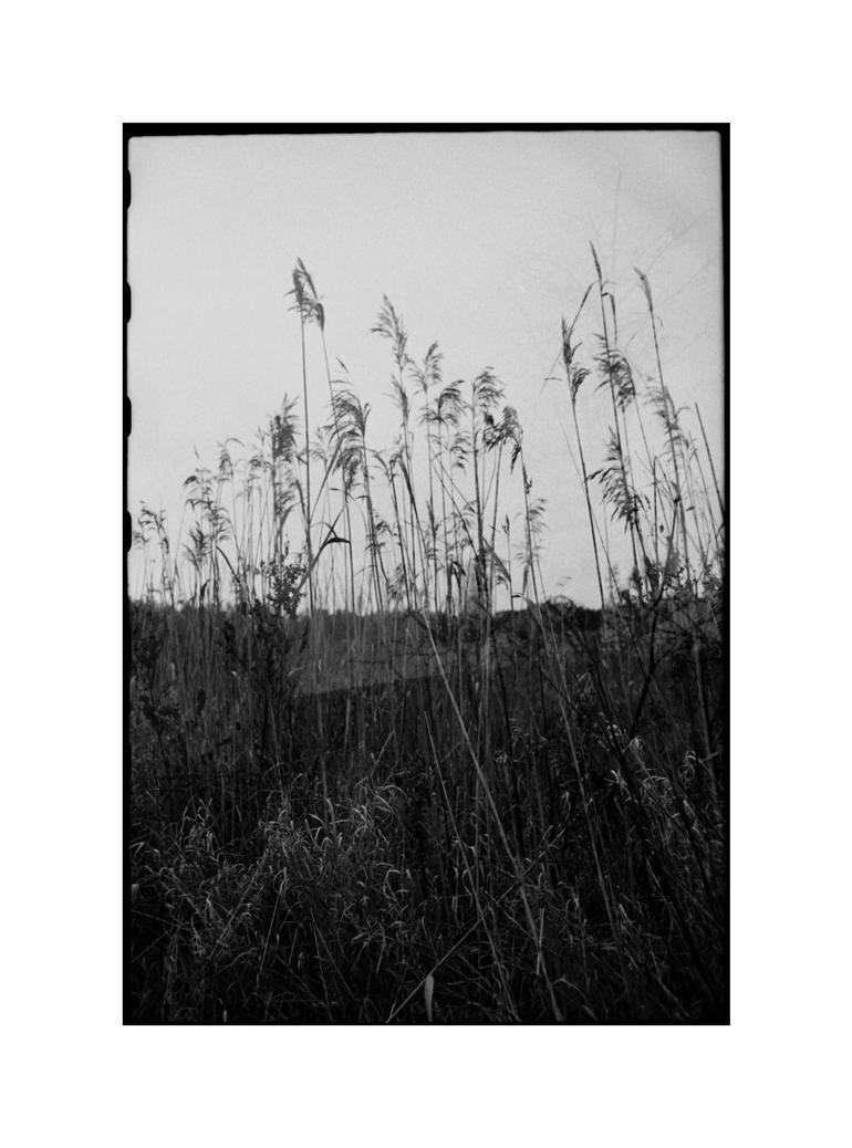 dvs303 by ForrestBump