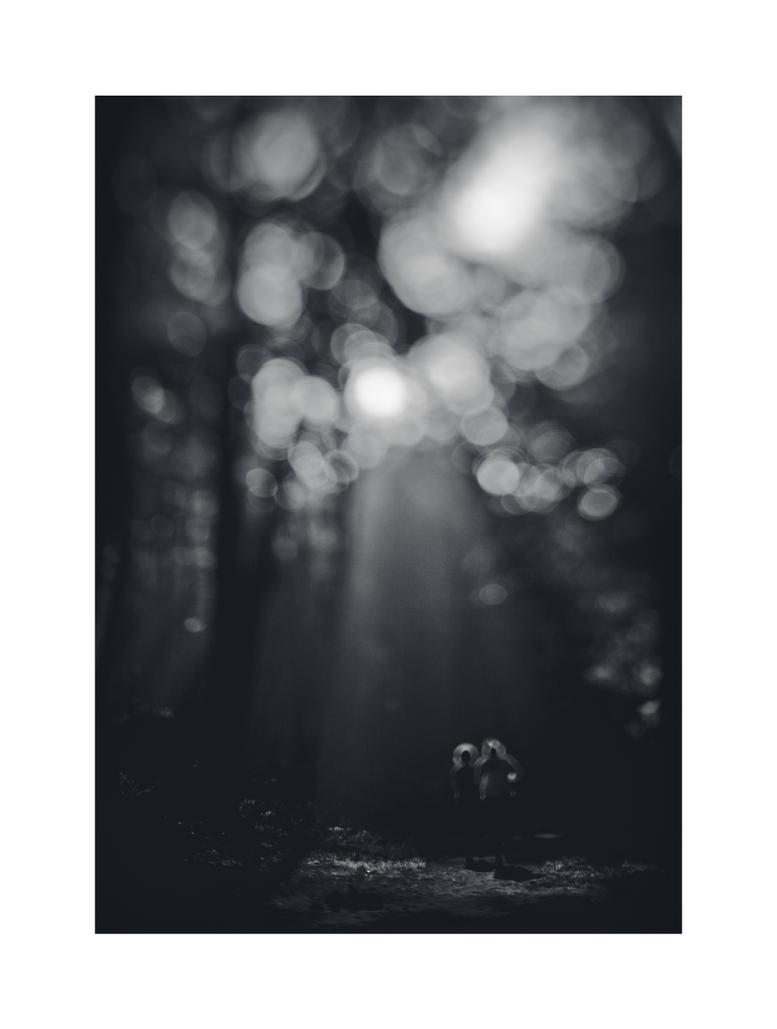 dvs382 by ForrestBump