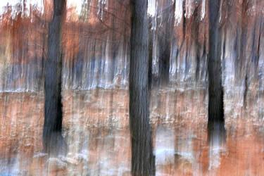 The Cursed Woods by Monastor