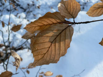 Winter Macro by Monastor