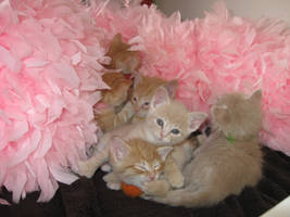 Kittens are in by applegenocide