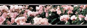 Rose Divider (long)