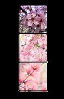 Blossom Divider by sasais