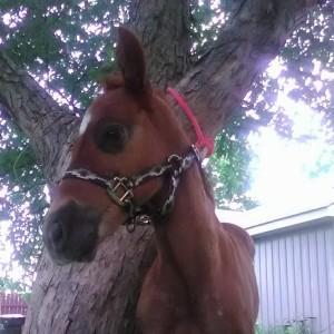 HorsesAreMyLife09's Profile Picture