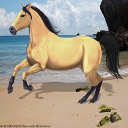 Buckskin-Beach by HorsesAreMyLife09
