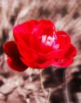 the flower in Neighbors garden