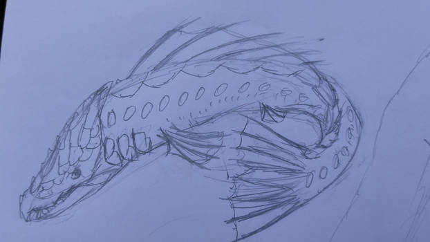 Sketches in School: Salmon something Fish