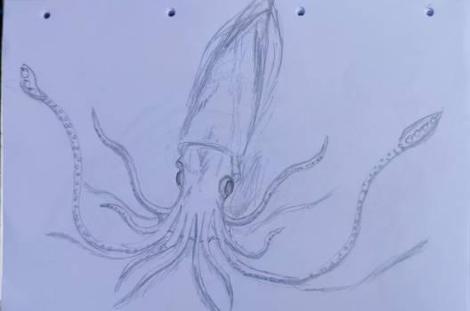 Sketches in School: Squid