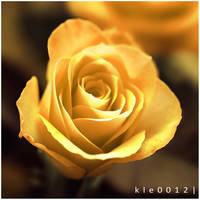 Twirl. by kle0012