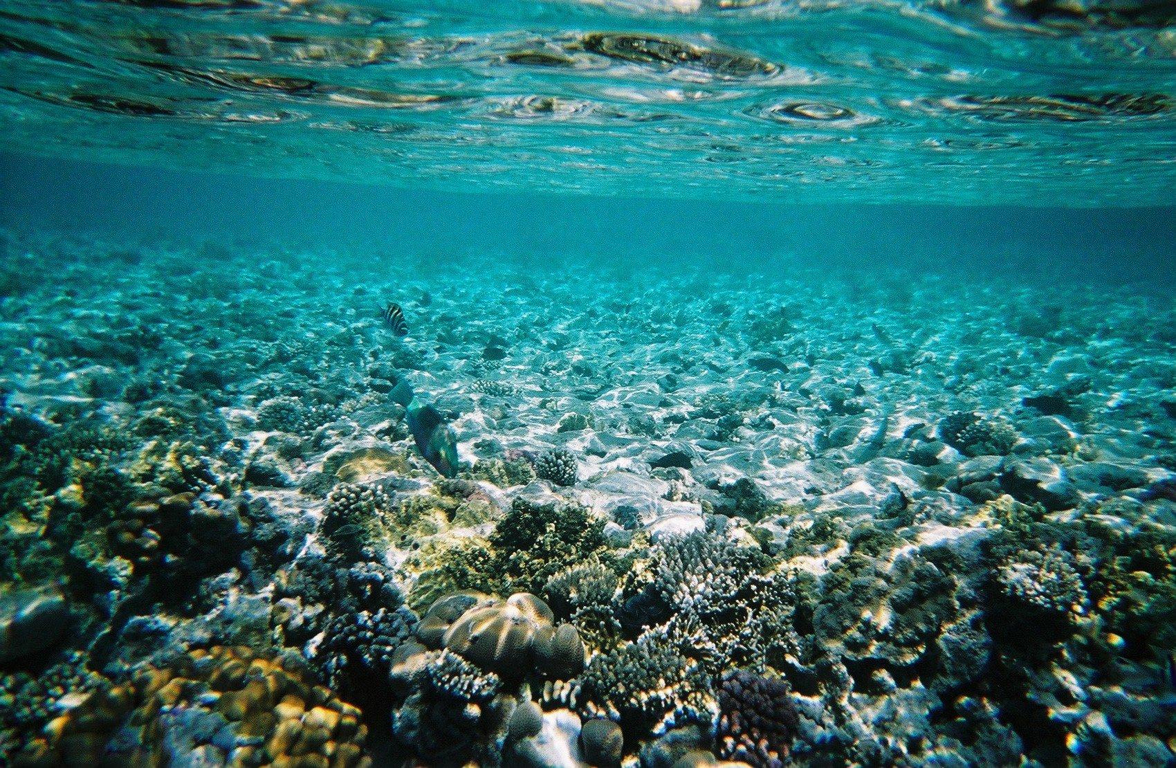 Heaven Under The Sea By Cassie O On Deviantart