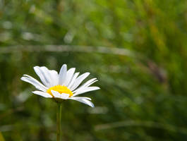 Just flower by Uligma