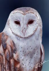 Barn Owl by Symcale