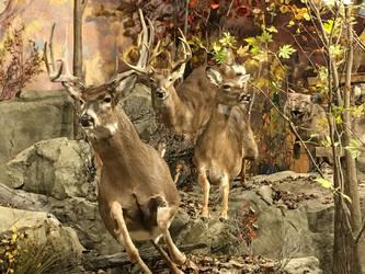 Deer by ItsAllStock
