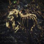 Dead III - The Baby Is Dead.