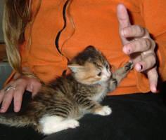 Cranky Kitten by karja