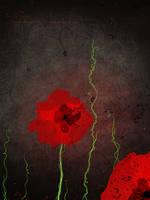 Poppy by missdine