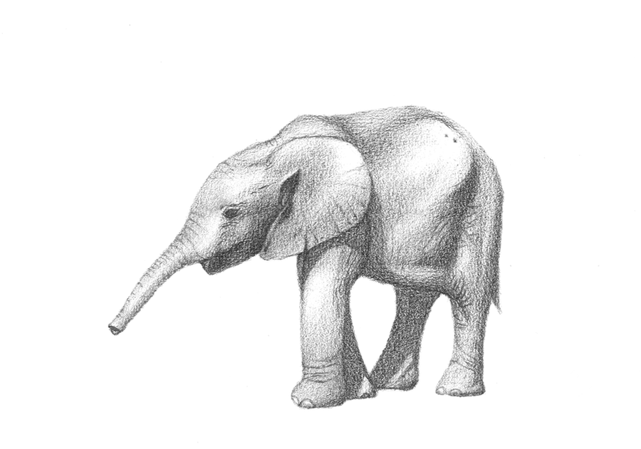 Elephant Drawing Wallpaper Pencil Drawing Baby Elephant