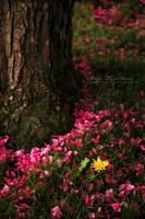 Pink Petals Fell by Proseuche