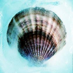 frozen shell. by Proseuche