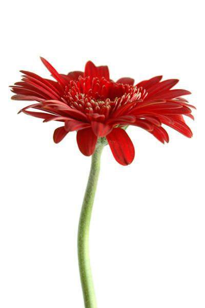Flower :stock: by Proseuche