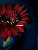 A Flower. by Proseuche