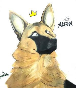 Dog Tags | Alpha