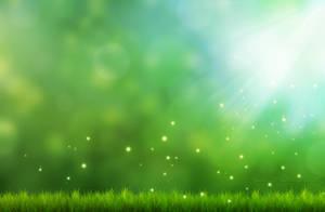 Bokeh and grass