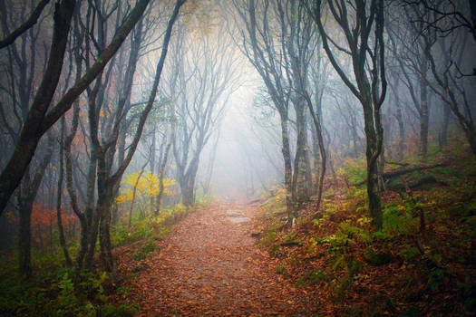Into the Forest - FREE STOCK IMAGE