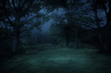 FREE STOCK IMAGE - Midnight Forest