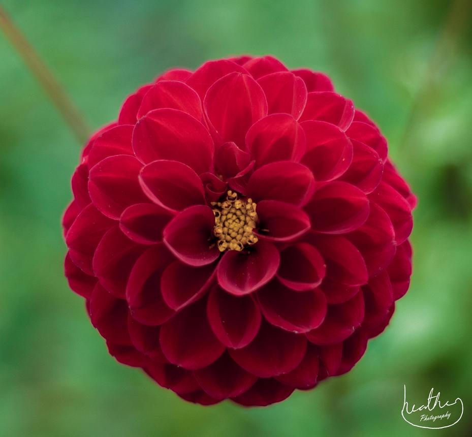 Mums Garden - Lawrenny: Pembrokeshire by Xsmile-PleaseX