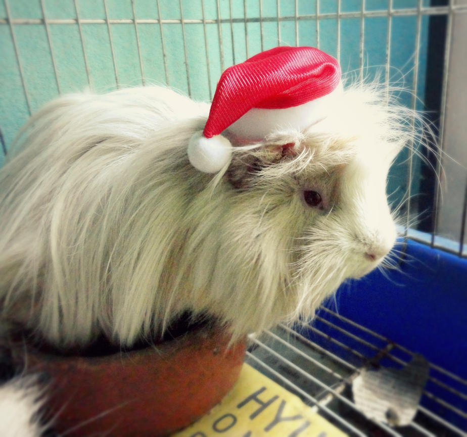 Merry Christmas from my Guinea Pig by Annabel158