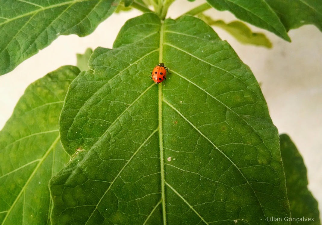 Hello Ladybug! by Annabel158