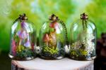 Muhsrooms by Wonder-fox