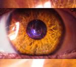Eye of EvolutioN