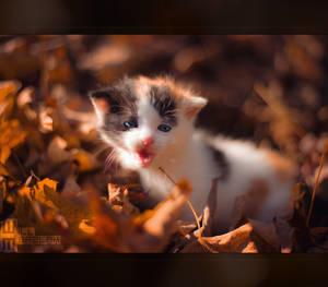 Autumn Kitten by MRBee30