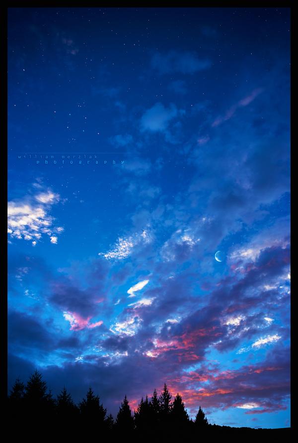 Silhouette Starlit Sky by MRBee30