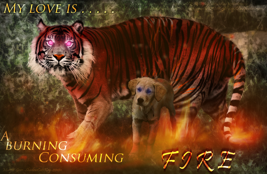 Show your tags and art! ____fire_____by_shadowcatskey-d33ee8u