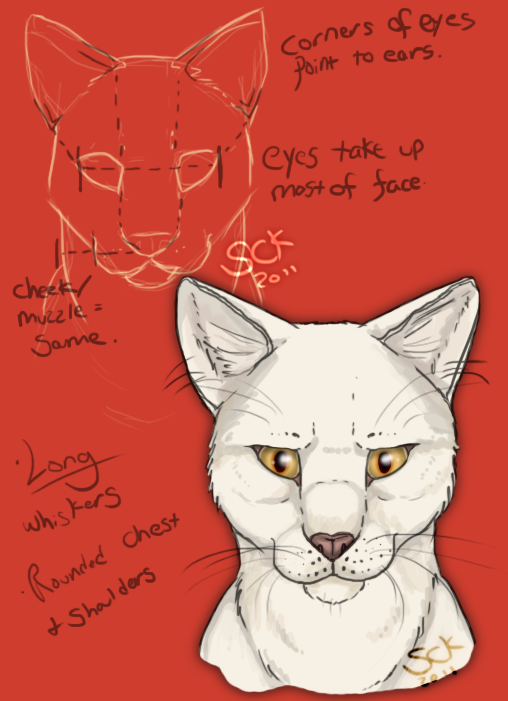 Cat facial anatomy study by ShadowCatsKey on DeviantArt